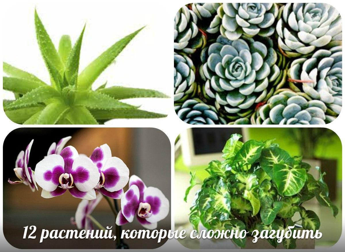 12 растений, которые сложно загубить