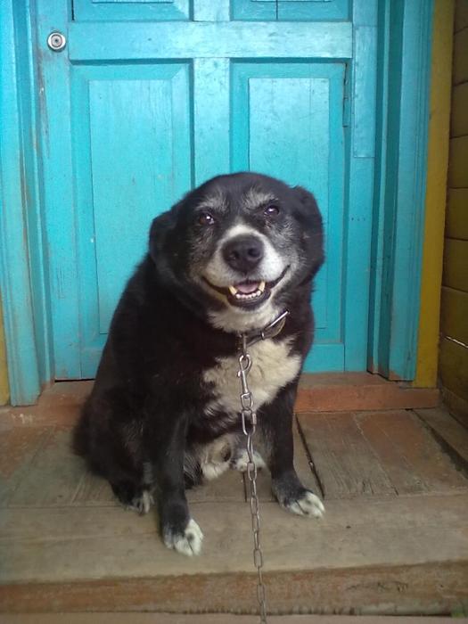 Грустная история одной собаки со счастливым концом