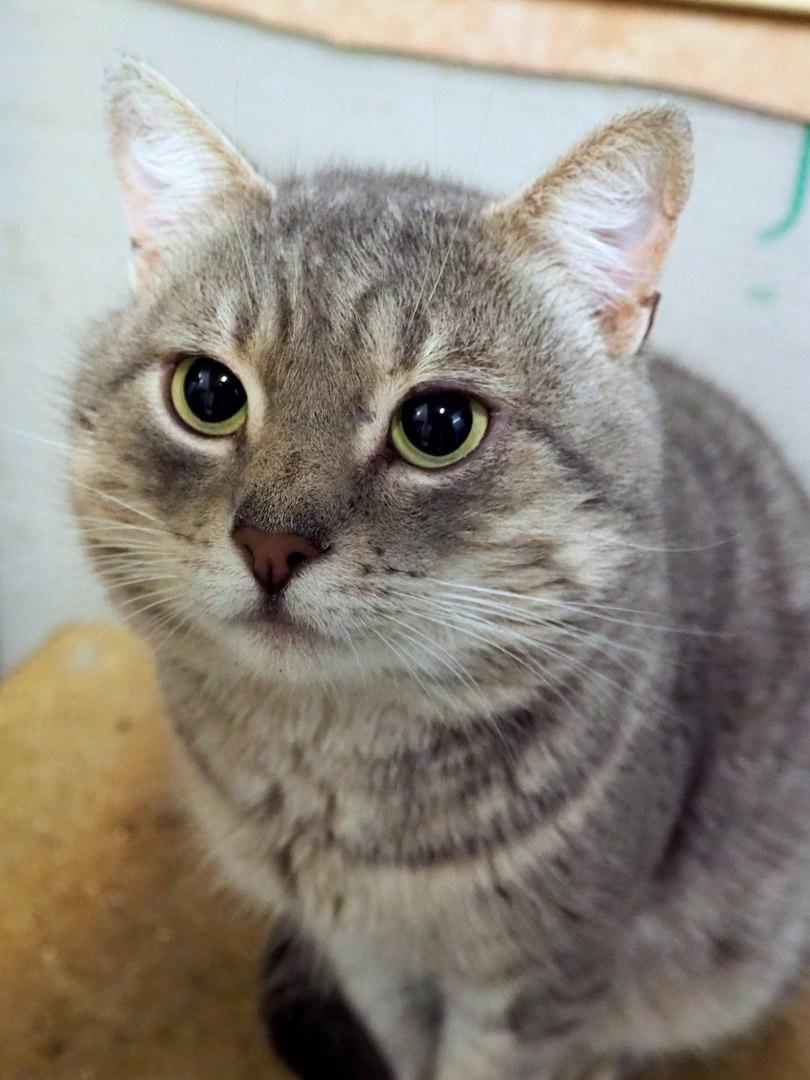 Котик спасён из Минской усыпалки, приехал в Питер в надежде найти своего настоящего Человека!
