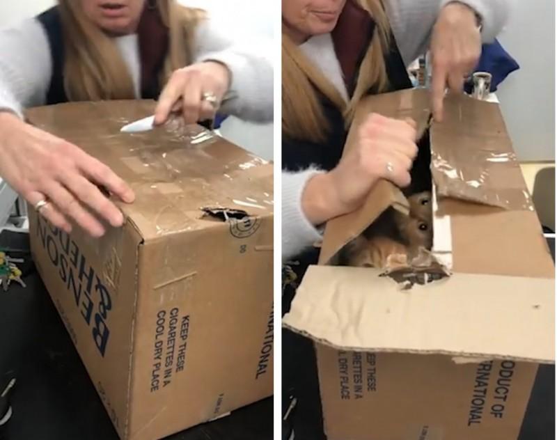 В наглухо заклеенных  скотчем коробках, выброшенных на улицу, было 11 живых котят