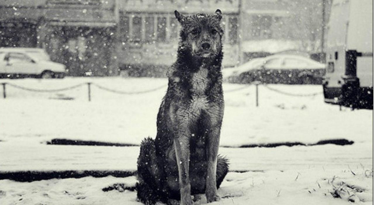 Бездомная собака спасла сбитую машиной девушку