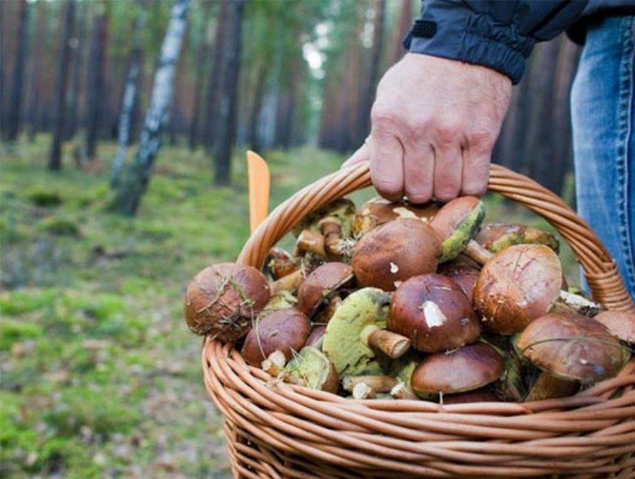 Грибников посчитают и заставят сдавать грибы государству