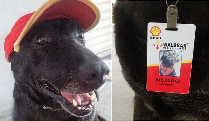 Собаки-работяги: этих милых псов спасли от смерти, теперь они «трудятся» вместе со своими хозяевами