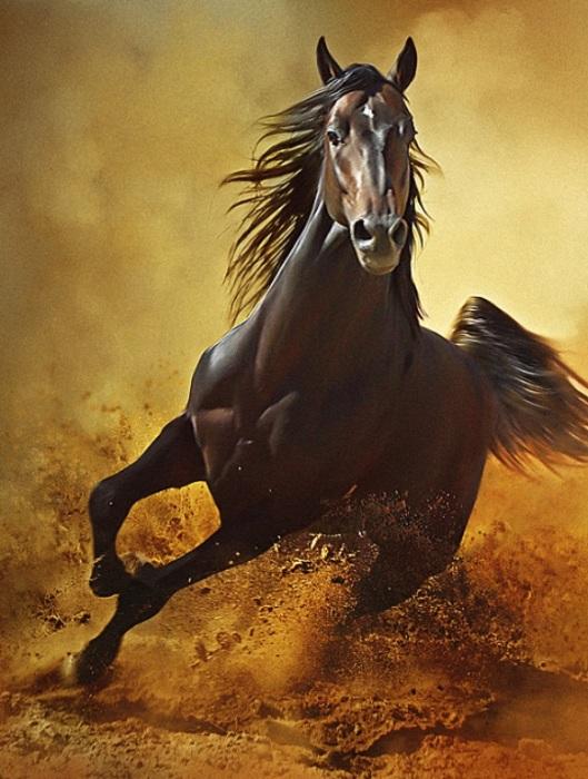 Красота, сила, грация: лошади в объективе Димитра Христова