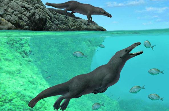 В Перу нашли останки четвероногого кита