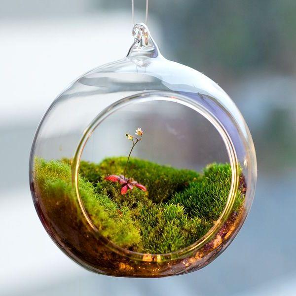 мшистый лес флорариум