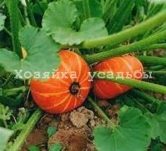 Лучшие сорта тыквы для выращивания в средней полосе