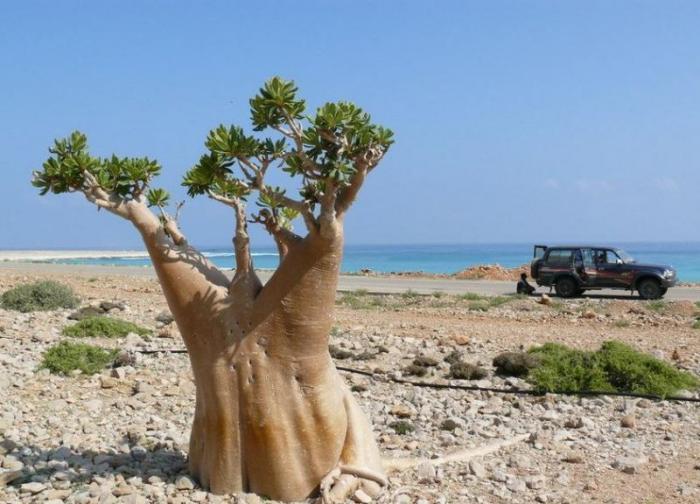 Остров Сокотра в Йемене (19 фото)