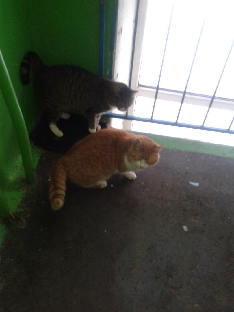 После смерти бабушки кошек выгнали из дома. Им очень плохо, их жизнь в опасности. Нужен дом!!!