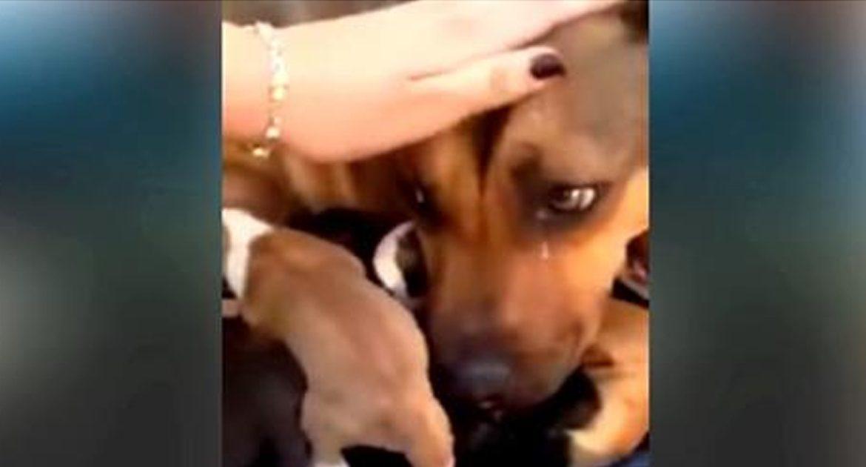 Реакция собаки на спасение её щенков. Невероятно трогательно.