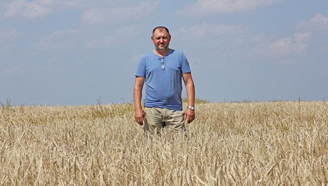Сельскохозяйственный ренессанс: как устроено российское фермерство