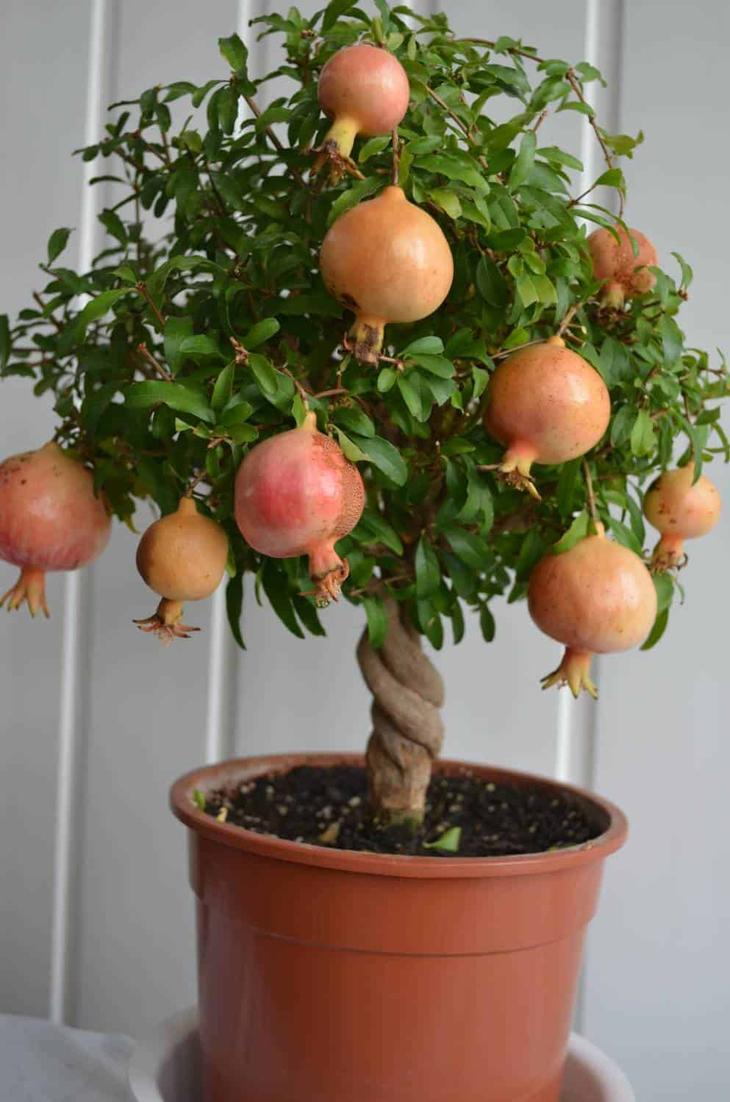 Выращивание растения Комнатн…