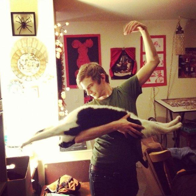 Позитив зверский теперь и для беззаветных кошколюбцев