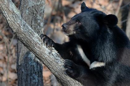 Красную книгу России обновили и вычеркнули популярных у браконьеров животных