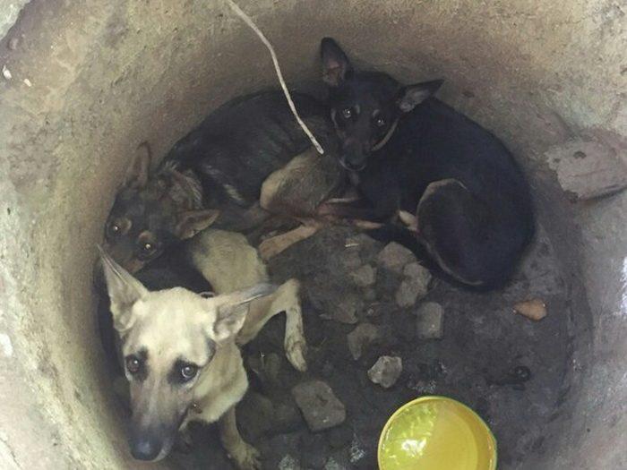 Парень чудом помог трем псам, брошенным на произвол судьбы