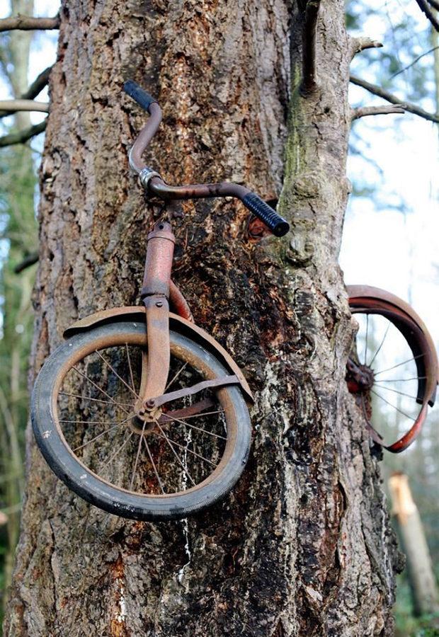 деревья_15
