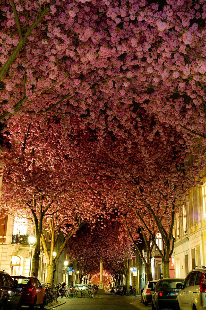 Улица г. Бонн, Германия красивые места, красота, невероятные места, фото