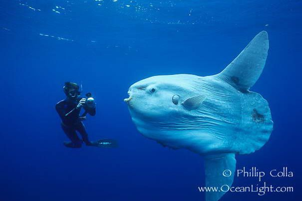 Самые необычные обитатели океанических глубин