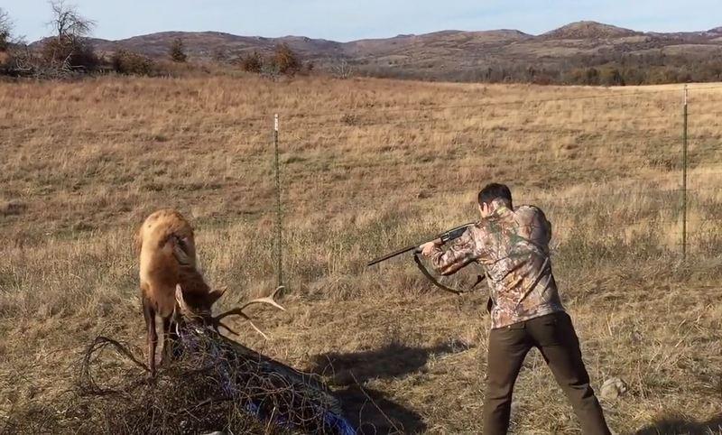 Одним точным выстрелом этот парень… нет, не застрелил — спас оленя.