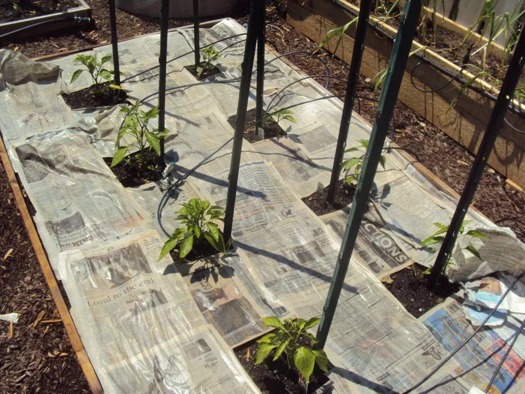 9 способов использования бумаги в саду
