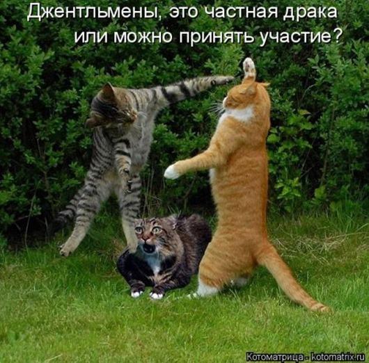 1480083097_svezhaya-kotomatrica-1