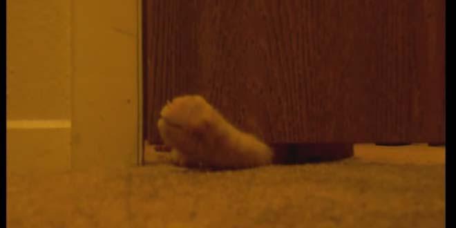 Ежедневно ровно в 5 кот начинает будить хозяина. Его методы сведут с ума любого!