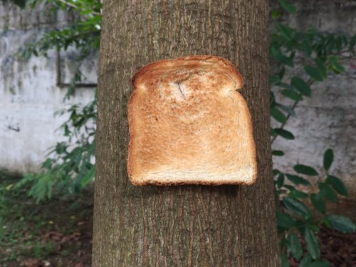 Новый тренд: хлеб, прикреплённый к дереву