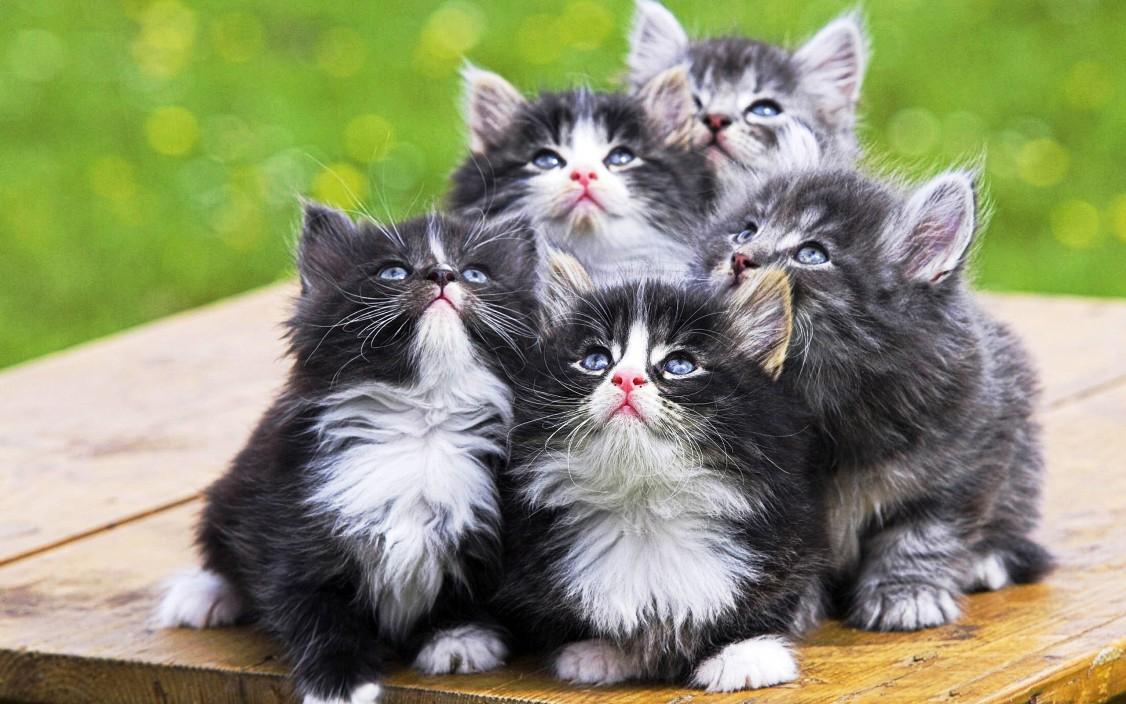 Мифы о котах заблуждения, коты