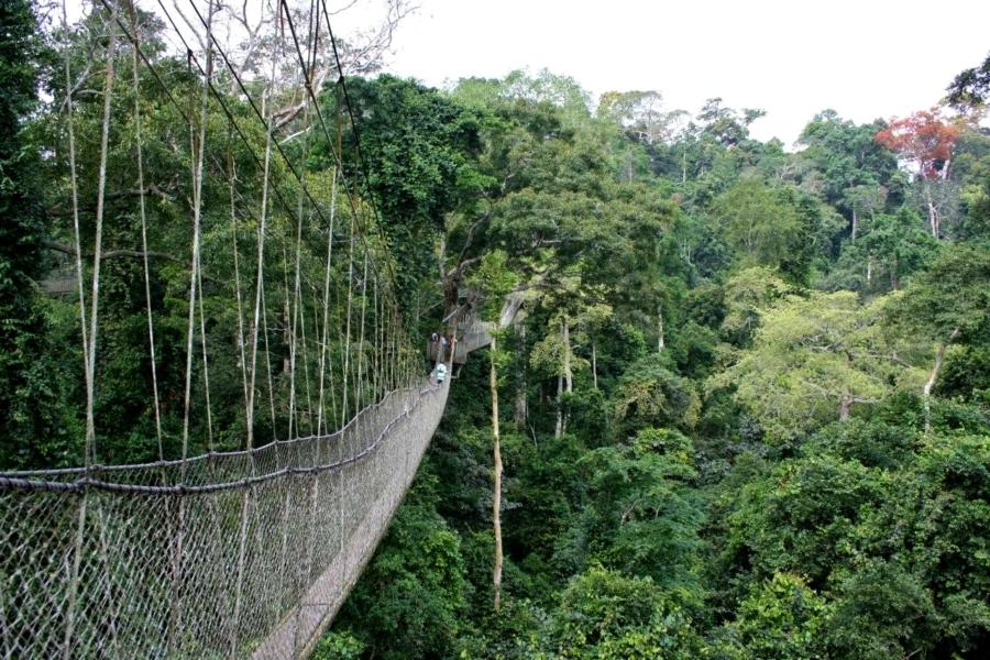 Kakum National Park Canopy Walkway