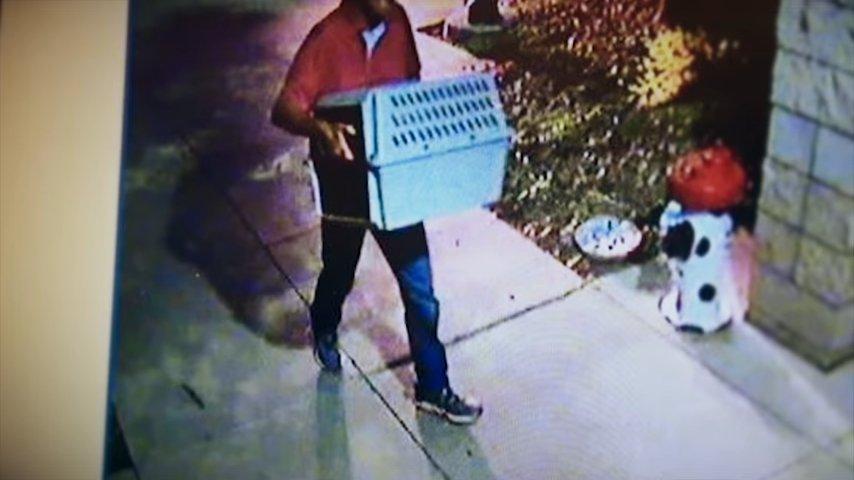 К дверям приюта неизвестный человек принес пластиковую переноску и оставил ее