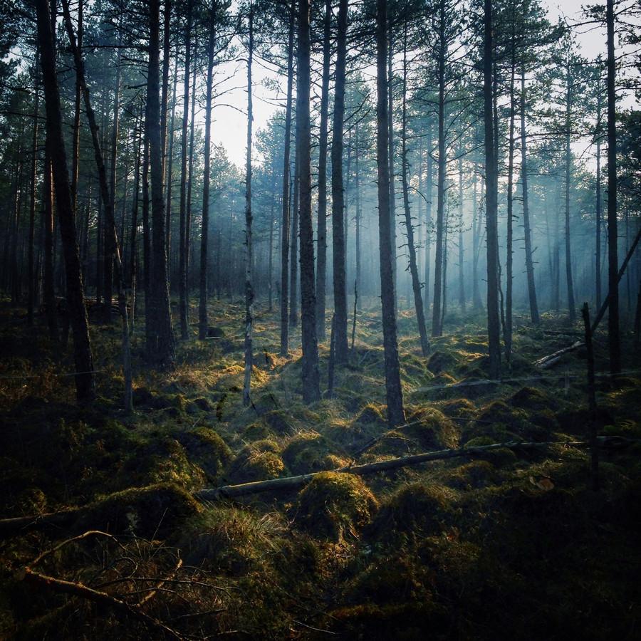 45 поразительных пейзажных фотографий, снятых на iPhone