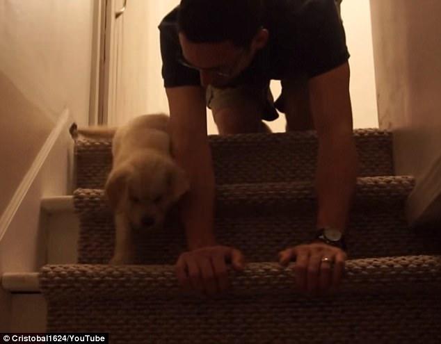 Милое видео недели: хозяин заботливо учит робкого щенка спускаться по лестнице