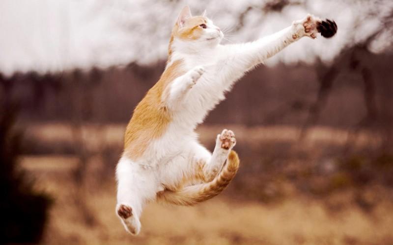 kitties03 30 способов использования котов в хозяйстве