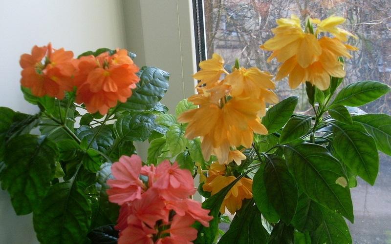 комнатные цветы по знаком задиака