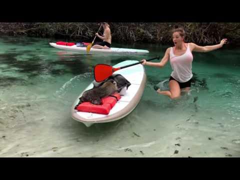 Во Флориде туристов пытаются обокрасть даже еноты