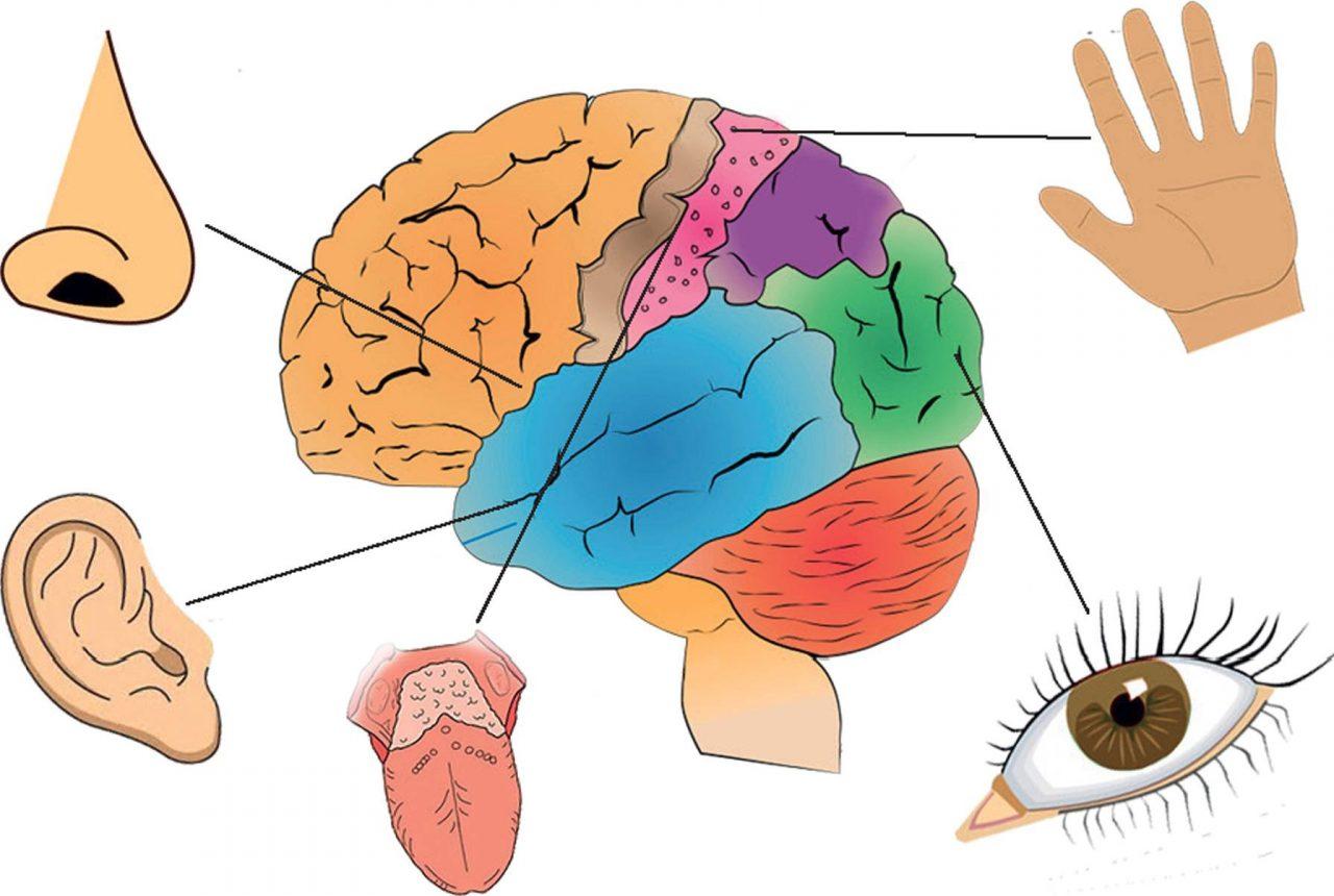 Как наши органы чувств обманывают нас