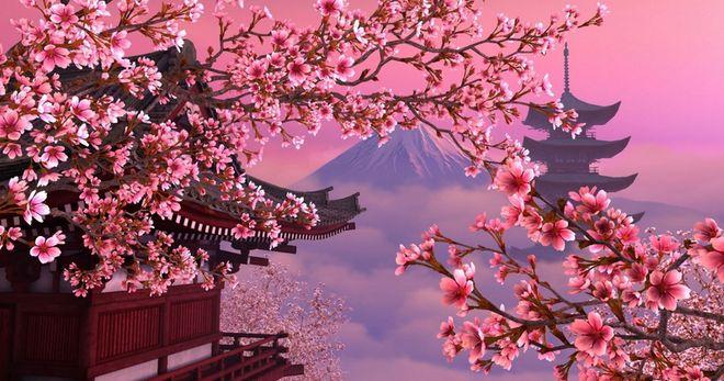 Как ухаживать за японской сакурой