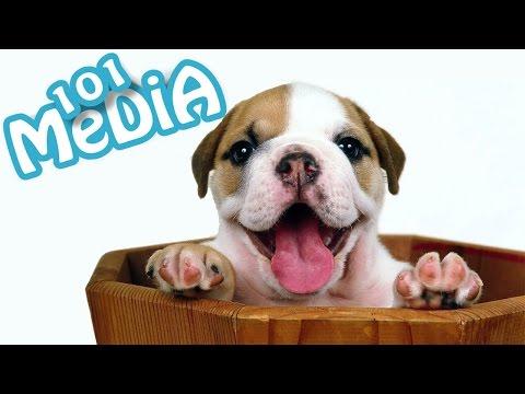 Самые смешные приколы про животных видео|Самые Смешные Кошки и Собаки|Новые приколы 2016 c Животными