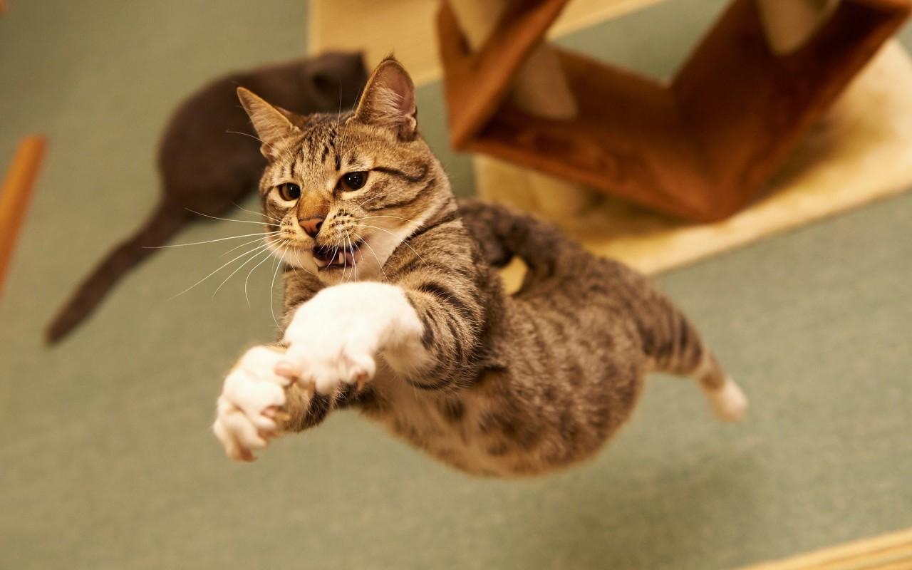 6 «нельзя» по отношению к кошкам