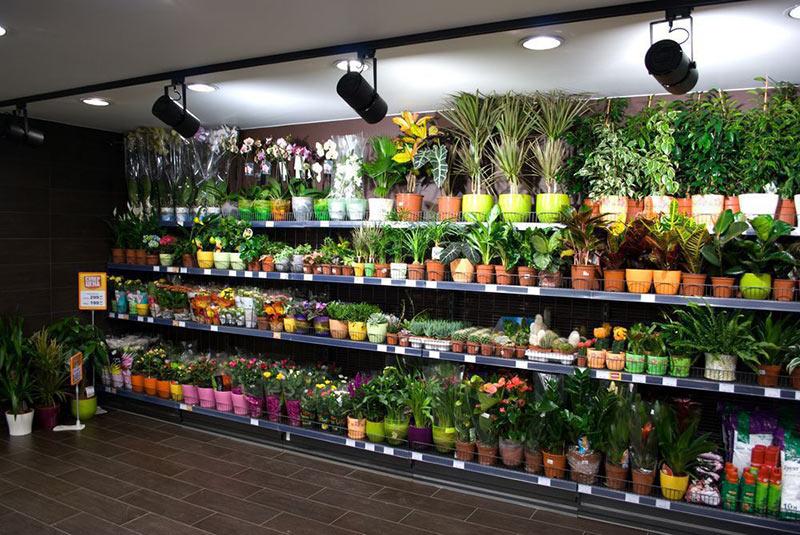 живые цветы в магазине