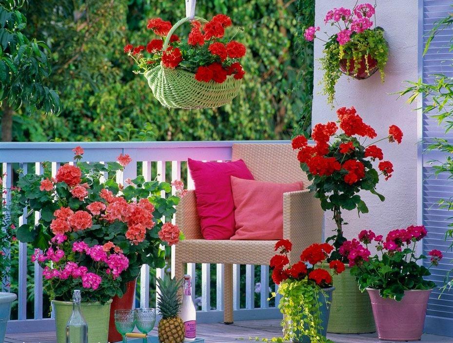 Красивые цвета герани на балконе