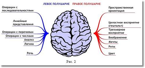 схема работы мозга
