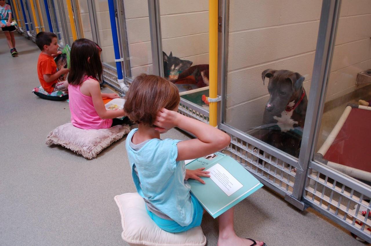 Дети читают собакам книги вслух, чтобы научить их снова доверять людям