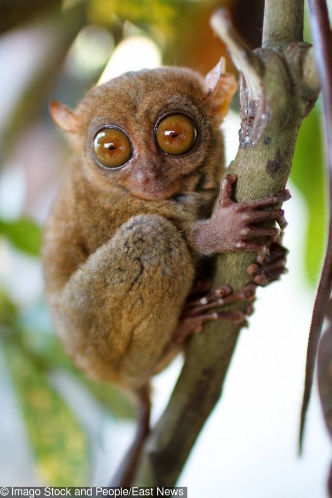11 невероятных животных, о которых мы почему-то никогда не слышали