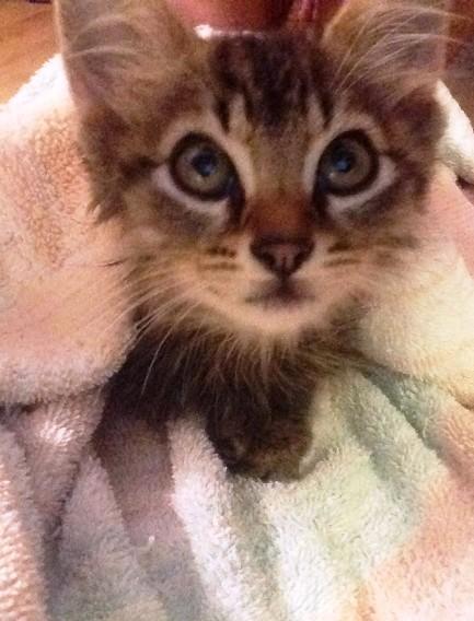 Котик принес домой маленького друга с улицы. И решил, что этот котенок теперь будет жить с ними!