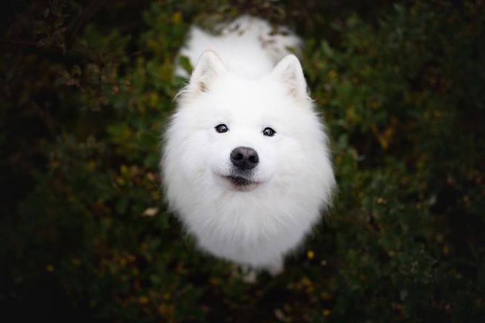 26 позитивных фотографий, на которых запечатлены самые счастливые собаки в мире