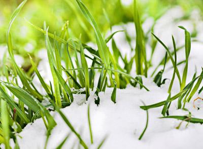 Пять секретов ухода за зелёной лужайкой… зимой