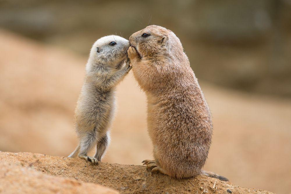 Как животные общаются между …