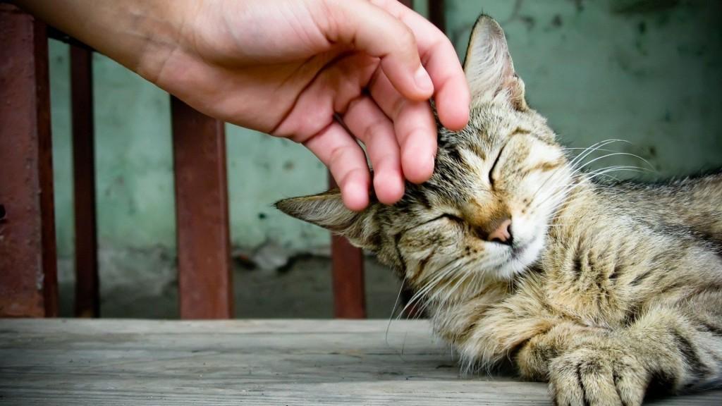 «Котики - это не только ценный мех» или пять причин, почему завести кота жизненно необходимо