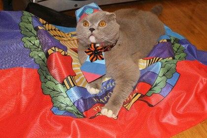 В ЛНР выбрали самого патриотичного кота